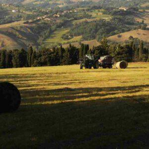 A Ragusa la prima comunità energetica agricola di autoconsumo collettivo grazie a Enel X e Banca Agricola Popolare