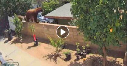 orso california