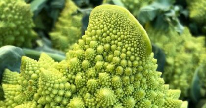 Broccolo romanesco, perché ha quella forma? La genetica spiega la sua geometria frattale