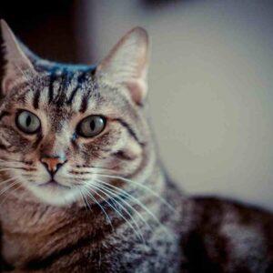 Firenze, appende gatto fuori dal balcone legandolo con la pettorina: denunciato per maltrattamenti animali