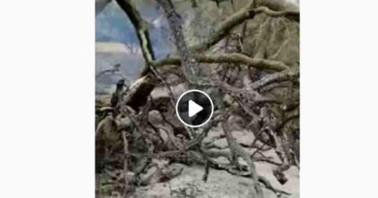 Cuglieri, olivastro millenario Sa Tanca Manna distrutto dall'incendio in provincia di Oristano