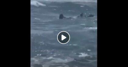 Salvataggio a Palinuro: cani bagnino salvano 15enne trascinata al largo dalla corrente VIDEO