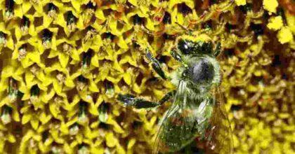 Alberto Fontana ucciso da uno sciame di vespe, la tragedia si è consumata a Osteria della Fontana (Anagni)