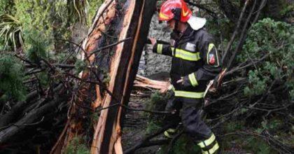 Corniglio (Parma), boscaiolo di 56 anni muore schiacciato da albero