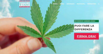 Cannabis legale referendum
