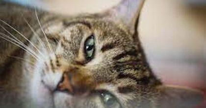 lesignano bagni gatti