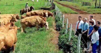 Mucca pazza, due casi in Brasile. Bloccate le esportazioni verso la Cina