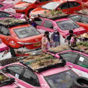 Thailandia, taxi inattivi a causa della pandemia: tetti delle auto trasformati in... orti
