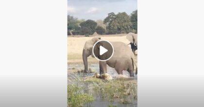 elefante in zambia
