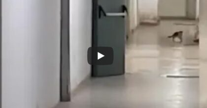 Ospedale di Paola (Cosenza): gatto insegue topo nel reparto di Radiologia