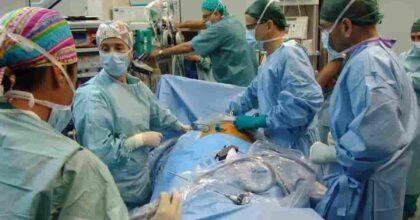 Trapianto di rene da un maiale su una donna in stato di morte cerebrale: è la prima volta